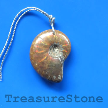 Pendant, Ammonite Fossil, about 22x29mm. Sold individually.