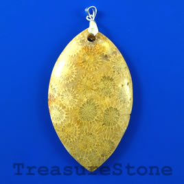Pendant, Coral Fossil, 34x48mm. Sold individually.