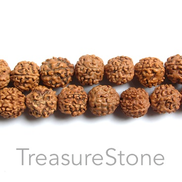 Bead, Rudraksha seed, about 15mm round. pack of 27pcs. - Click Image to Close